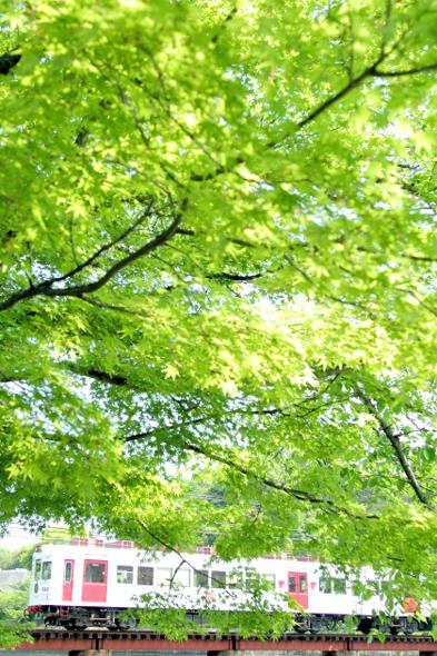 2013/5/5 和歌山電鐵貴志川線 大池遊園