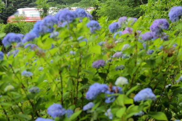 2013/6/15 南海高野線 紀伊細川