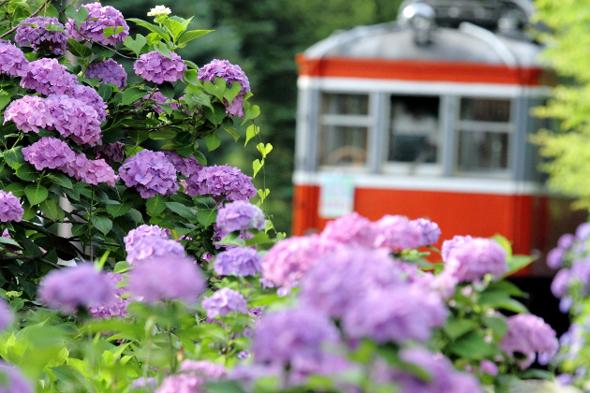 2013/6/29 箱根登山鉄道 彫刻の森