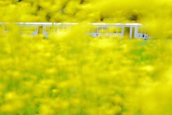 2013/8/3 貴志川線 大池遊園~西山口