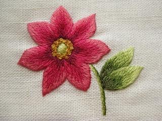 1 Cerise anemone