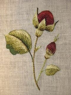 Burgundy Rosebuds