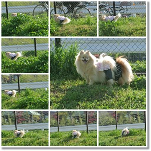 cats4_20130413175644.jpg