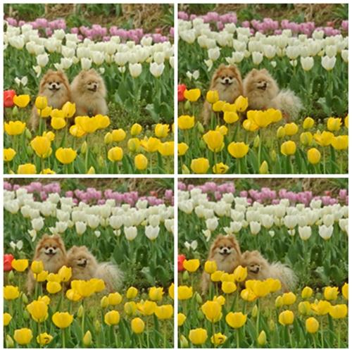 cats_20130406195513.jpg