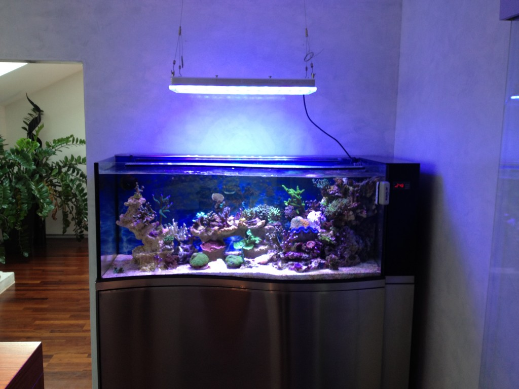 BUY_LED_Aquarium_Lighting_Liechtenstein-1024x768.jpg