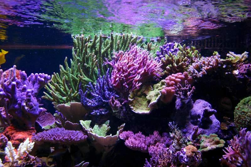 Tanne_Hoff-_aquarium.jpg