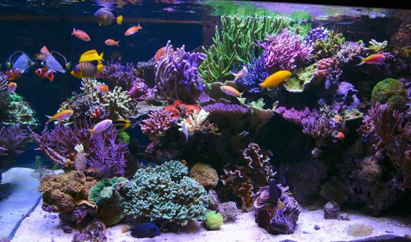 Tanne_Hoff-_aquarium_LED_Orphek_Atlantik.jpg