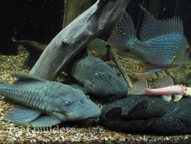 satellite-led-aquarium-3.jpg