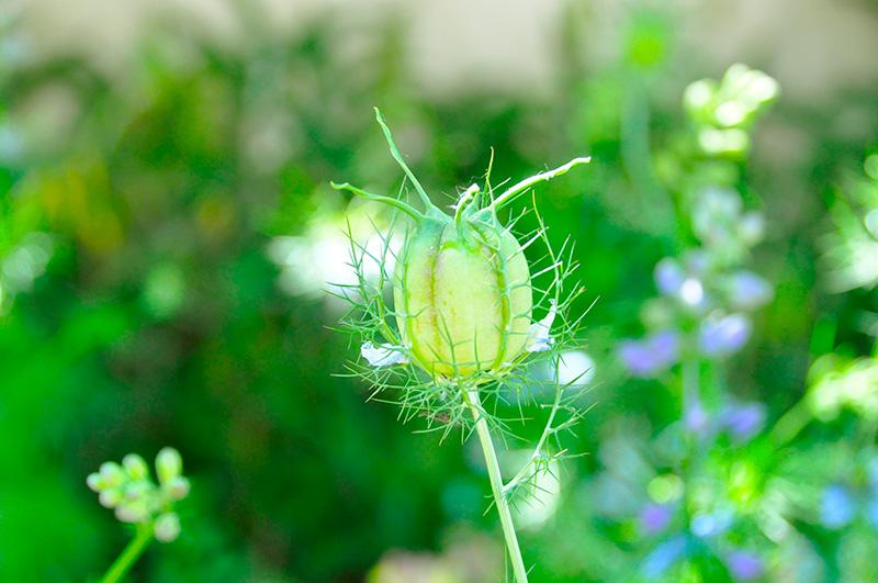 flowerno9800.jpg