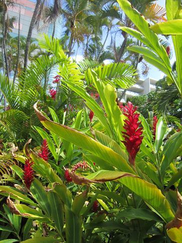 ハワイの花