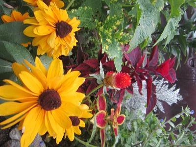 夏の庭20138月