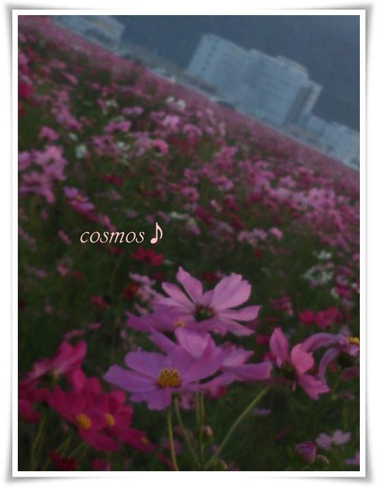 cosmosDSC_0334.jpg
