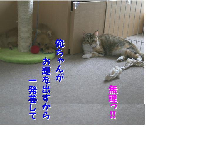 blog真寿ちゃんの一発芸0c