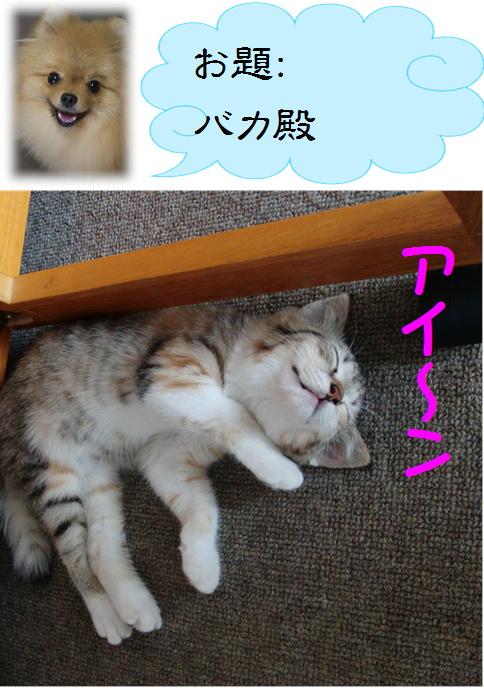 blog真寿ちゃんの一発芸4c