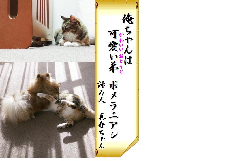 blog犬猫川柳4