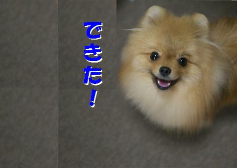 blog犬猫川柳1-a