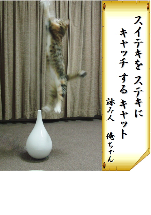 blog犬猫川柳2-b