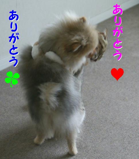blog犬猫川柳5b