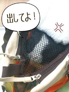 あんこ in Carry