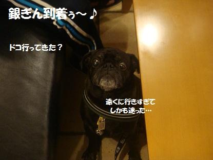 DSC05243_20131218202256909.jpg
