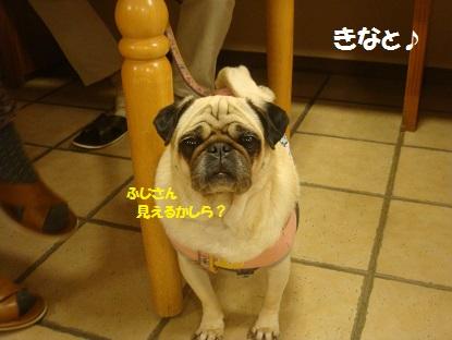 DSC05779_20140103205614a93.jpg
