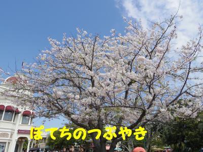 20130404 桜