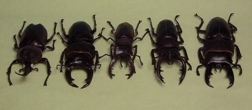 食玩・昆虫ハンター全種