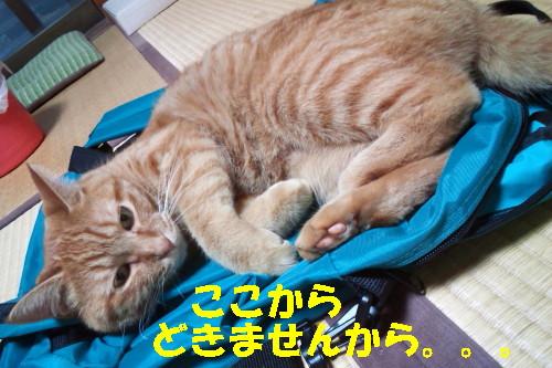 ako_201308160701.jpg