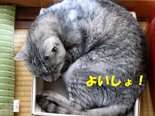 boo_201309221232.jpg