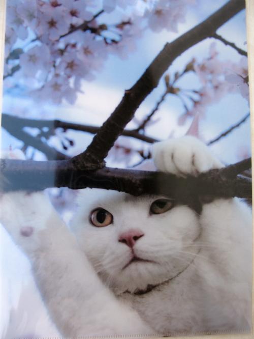 iwagou_201309141734.jpg