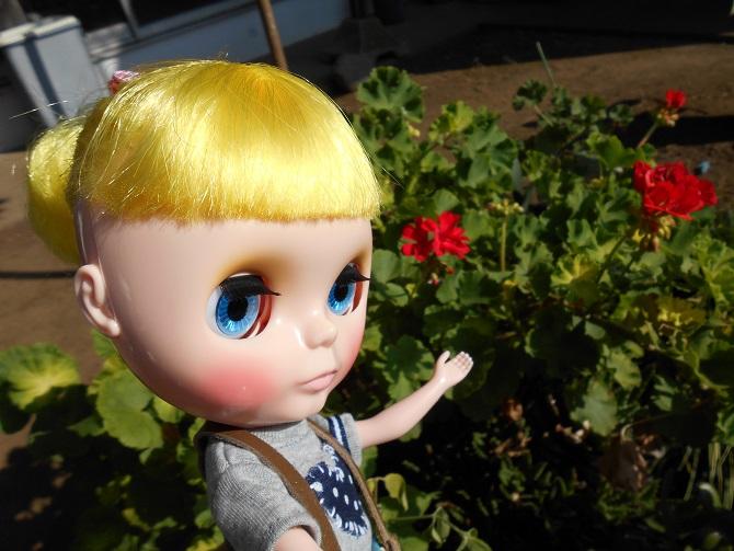 11 猛暑の中咲く花