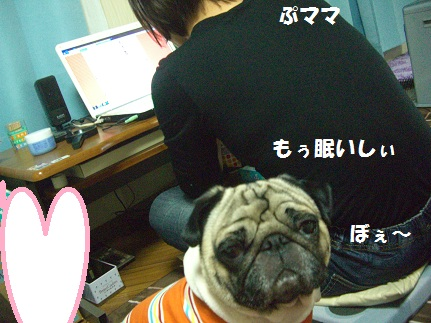CIMG8713.jpg
