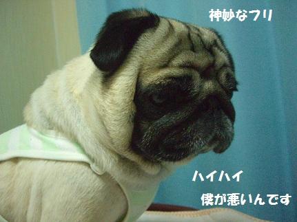 CIMG8824.jpg