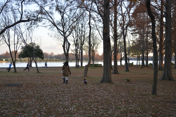 落ち葉の上を走るうるまと母