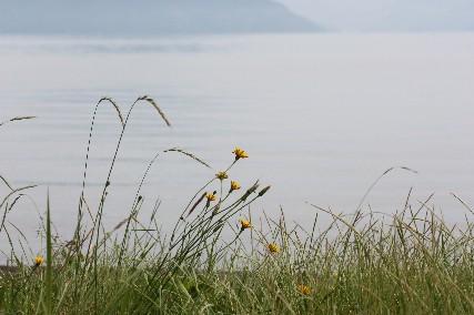 13jun琵琶湖畔花