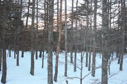 2014山中湖荘1月2日窓からのピンク富士