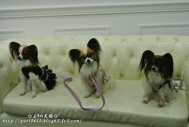 セレブ犬1