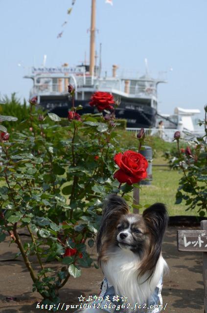 船とバラとマリンちゃん
