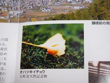 PA300262.jpg