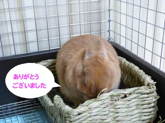 ぴょん子131231_05