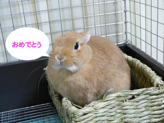 ぴょん子140101_03