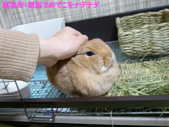 ぴょん子131231_01