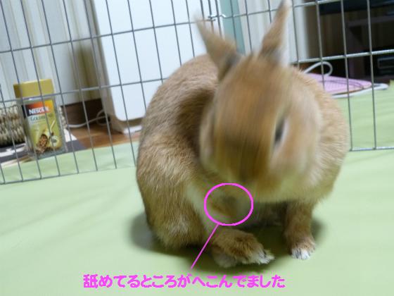 ぴょん子140105_05