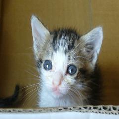 コンビニ猫1