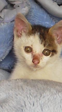 20111028子猫4