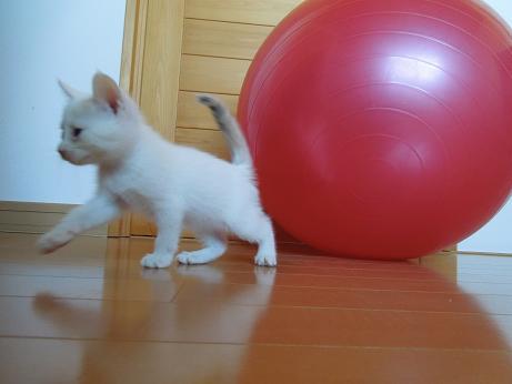 2白い仔犬10月27日