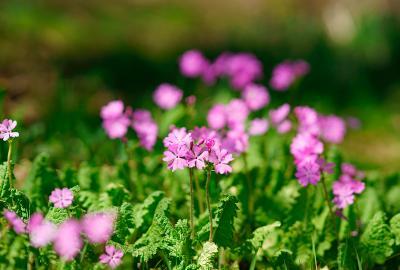 flower130512_02.jpg