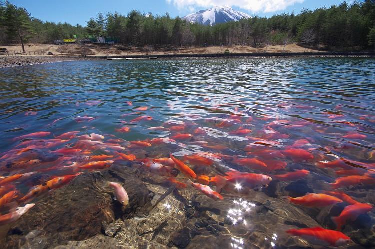 浅間山と池の風景