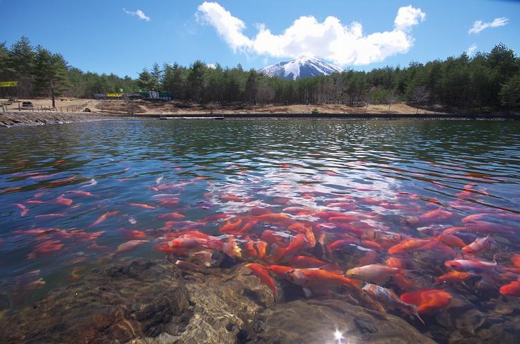 浅間山と池の風景 2