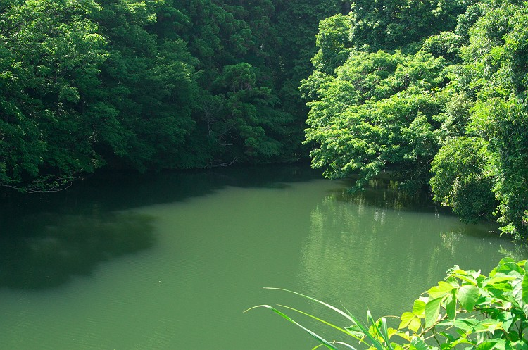 水辺の風景